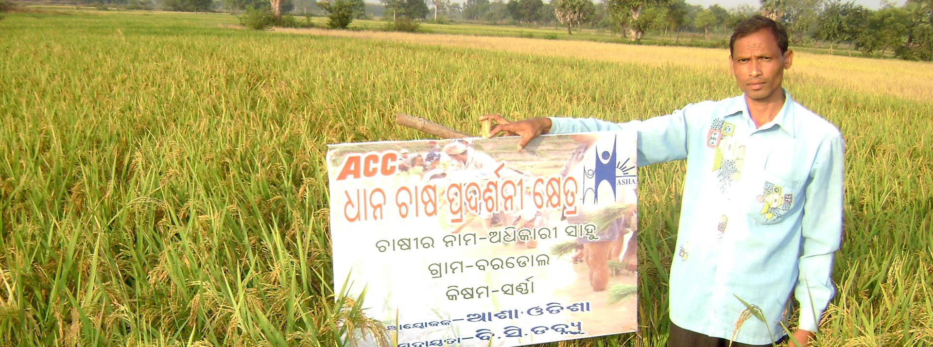 SRI method of Cultivation by ACC Project
